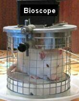 Биоскоп-мышки